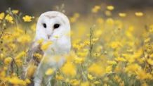 Therapist and counselors: Owl Medicine Healing Circle, licensed professional counselor, ,